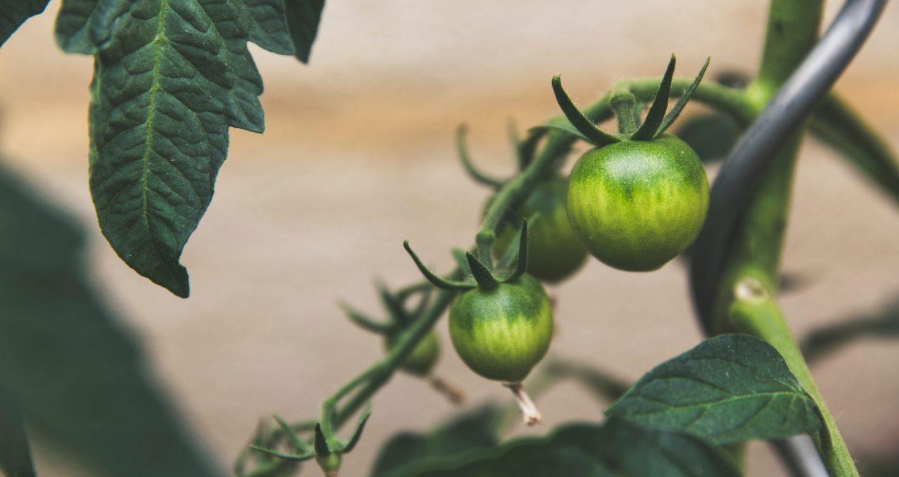 Qu'est-ce que l'agriculture vivrière ?
