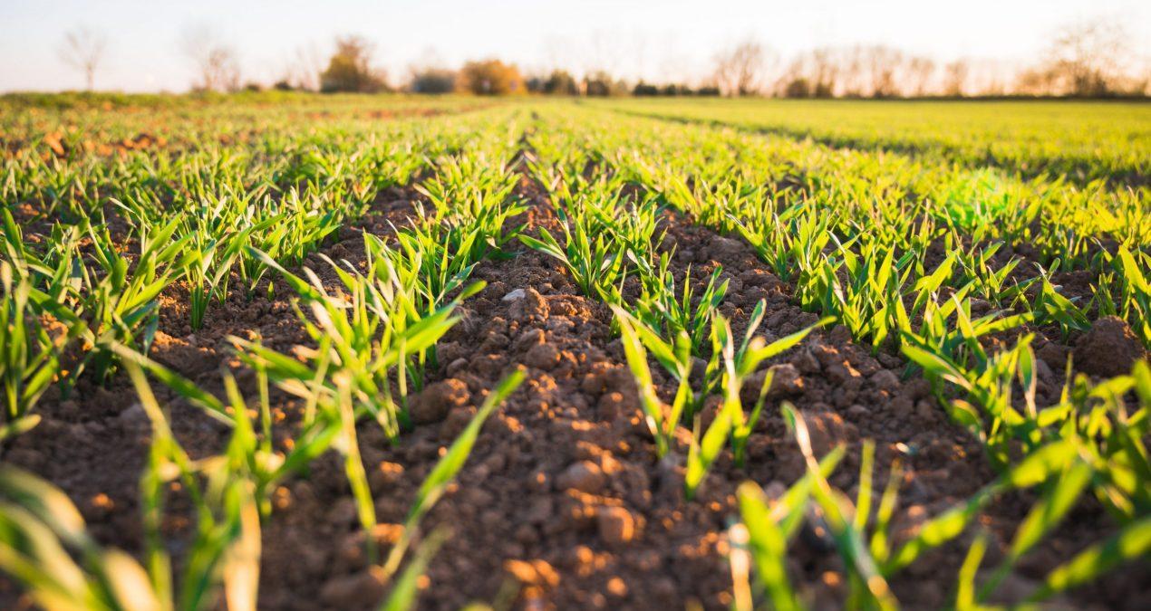Quels sont les différents types d'agriculture ?